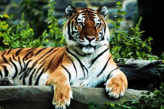 Bangladesh: A country of natural beauty